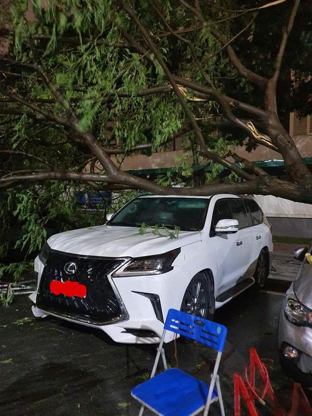 Hy hữu màn đỡ cây đổ đầy xót xa trong đêm mưa lớn tại Hà Nội: Lexus LX 570 giá chục tỷ bẹp rúm nóc xe - Ảnh 1.