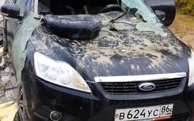 Ford Focus biến dạng vì bị gấu đập phá