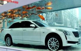 """Cadillac ngâm xe sang CT6 trong bể cá vàng để """"lấy may"""""""