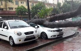 Hà Nội: Bị cây xà cừ đổ trúng trong mưa bão, Kia Cerato bẹp dúm
