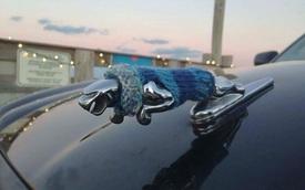 """""""Ngả mũ"""" trước những cách trang trí ô tô sáng tạo và hài hước"""