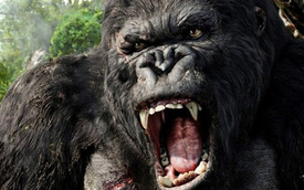 """Đoàn làm phim """"Kong: Skull Island"""" xây đường dài 3 km tại Quảng Bình"""