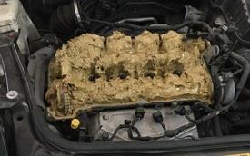 """Người phụ nữ bị gọi là """"tóc vàng hoe"""" vì đổ dung dịch rửa kính chắn gió vào động cơ xe Mini"""