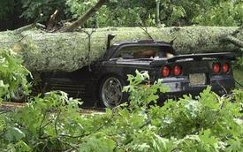 Chevrolet Corvette bị gốc cây đè bẹp, người lái may mắn sống sót