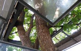 """Người Nhật xây ga tàu điện """"né"""" cây 700 năm tuổi như thế nào"""