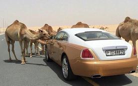 Những bức ảnh lột tả sự xa hoa tột độ tại Dubai: Kem vàng, nuôi hổ làm thú cưng hay siêu xe hạng sang