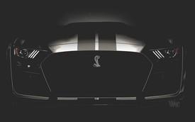Ford Mustang Shelby GT500 2019 - Rắn chúa dần lộ diện