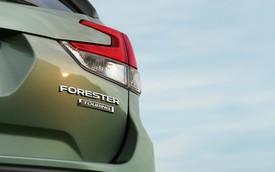 Thêm ảnh Subaru Forester 2019 trước ngày ra mắt