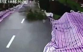 Trung Quốc: Cả đoạn đường lớn dài hơn 50 mét sụp đổ trong tích tắc