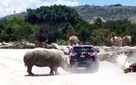 Vào tham quan vườn bảo tồn hoang dã, SUV bị tê giác hất nẩy tưng tưng trên đường