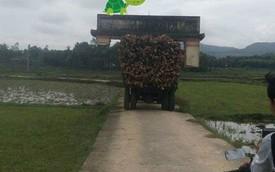 Cười rơi nước mắt cảnh xe công nông chở gỗ quá cao, dỡ cả cổng làng đi bon bon trên đường