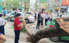 Cành cây gẫy đè trúng 2 ô tô trên đường, khoảnh khắc tài xế thoát nạn khiến bao người thở phào