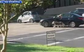 Lái xe ô tô dắt chó đi dạo, người đàn ông bị gạch đá không thương tiếc