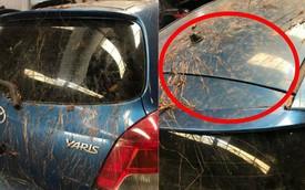 Xôn xao chiếc Toyota Yaris bị rễ cây bám dày đặc