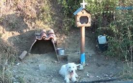 Chú chó chờ chủ 18 tháng tại hiện trường tai nạn giao thông