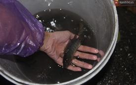 Người Hà Nội mang rổ ra giữa đường phố bắt hàng kg cá trong đêm mưa gió