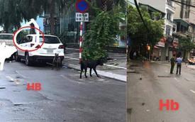 Công an phải phong tỏa cả tuyến phố để bắt 3 con chó dữ lao ra từ xe Mazda