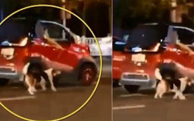 Chỉ vì ô tô hết chỗ, nữ tài xế kéo chú chó chạy theo xe suốt quãng đường dài khiến MXH phẫn nộ