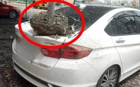 Hình ảnh xe hơi vỡ toác kính, hư hỏng sau trận gió cực lớn ở Sài Gòn được chia sẻ