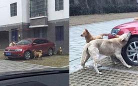 Đá con chó hoang để giữ chỗ đỗ xe, người đàn ông bị 'trả thù' theo cách không ngờ