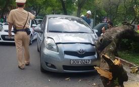 Hà Nội: Cây xanh đường kính gần 1 mét bật gốc đè trúng xe ô tô giữa trời nắng