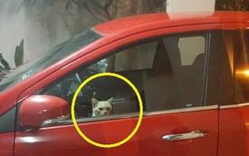 """Bị mắc kẹt trong xe ô tô nhà hàng xóm, boss mèo nhanh trí bật đèn xi nhan lên để kêu sen đến """"cứu giá"""""""