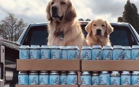 Dân tình phát sốt vì cặp cún làm shipper bia mùa cách ly, nhanh nhẹn và cực thạo việc!