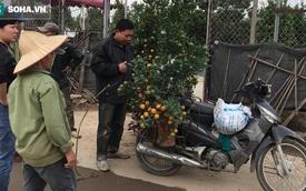 Tài xế nghỉ làm đi chở thuê cây cảnh ngày cận Tết kiếm tiền triệu mỗi ngày