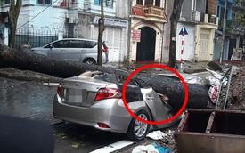 Chiếc xe ô tô bị cây đổ đè bẹp, biến dạng trong cơn mưa lớn ở Hà Nội
