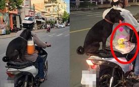 """Chú chó """"hot"""" trên MXH: Sáng mang cặp lồng tối mang đèn đi chơi, ngồi xe máy dạo quanh phố"""