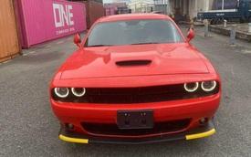 Soi 'xe cơ bắp' Dodge Challenger GT thứ 3 về Việt Nam: Ngoại thất thuộc hàng độc, chào giá hơn 3 tỷ đồng