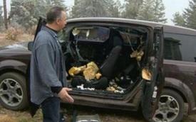 Người đàn ông đỗ xe bên rừng, quay lại bỗng thấy xe 'nát bét': Khi nhận ra thủ phạm mới thầm cảm ơn trời đất!