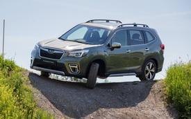 Subaru Forester và Outback sắp có phiên bản chuyên off-road: Mạnh hơn, cao hơn, được gắn mác mới