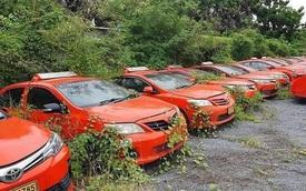 Giãn cách vì dịch, 200 chiếc taxi nằm chơi cho cỏ mọc kín