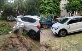 Ôm trọn cây bị đổ sau mưa lớn, thiệt hại của VinFast Fadil làm CĐM thốt lên: 'Mua Fadil thôi'