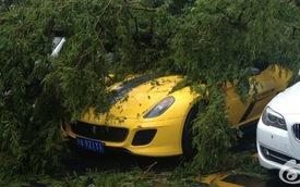 Ferrari 599 GTO: Đỗ cũng không yên