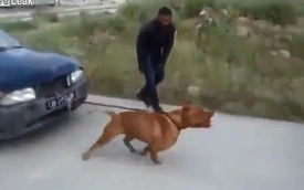 """""""Chó chọi"""" kéo xe không hề thua kém xe cứu hộ"""