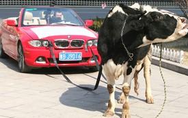 Thuê bò kéo BMW 1-Series Cabriolet đến đại lý