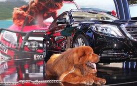 VMS 2013: Chó ngao Tây Tạng xuất hiện tại triển lãm ôtô