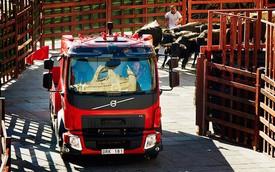 Xe tải Volvo khiêu khích đàn bò tót