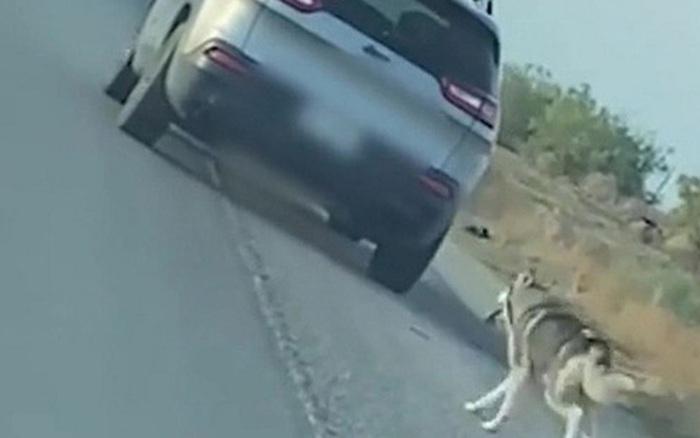 Nhẫn tâm bỏ lại chó cưng rồi lái xe rời đi, diễn biến sau đó khiến người chủ xấu hổ không để đâu cho hết